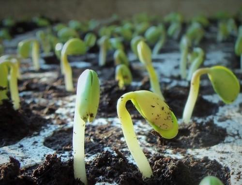 Sentenza della Corte di Giustizia sulle nuove tecniche di riproduzione ed OGM, dibattito aperto per le Commissioni AGRI ed ENVI