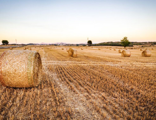 No al taglio dei fondi per lo sviluppo rurale nella futura PAC, l'appello della Coalizione rurale