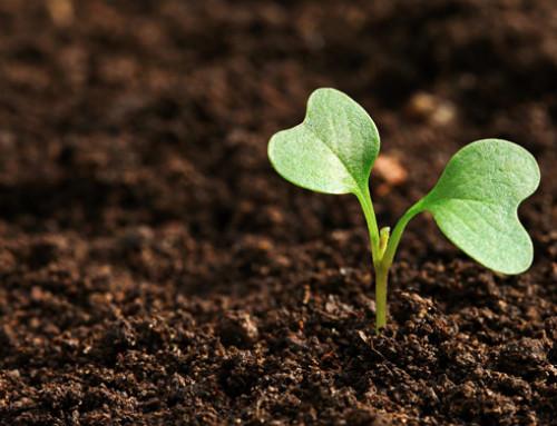 La Corte dei conti europea esamina il contributo dell'UE alla biodiversità in agricoltura