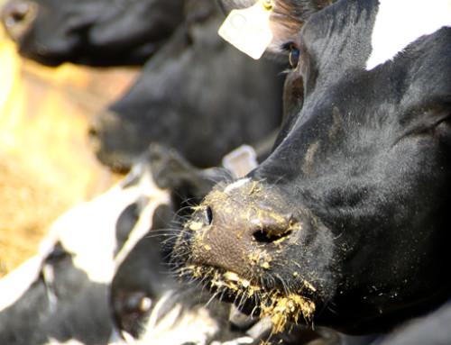 """Corso del Polo di Formazione per lo Sviluppo Agro Zootecnico """"Nutrizione"""""""