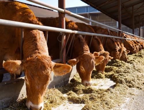 Etica nell'allevamento degli animali