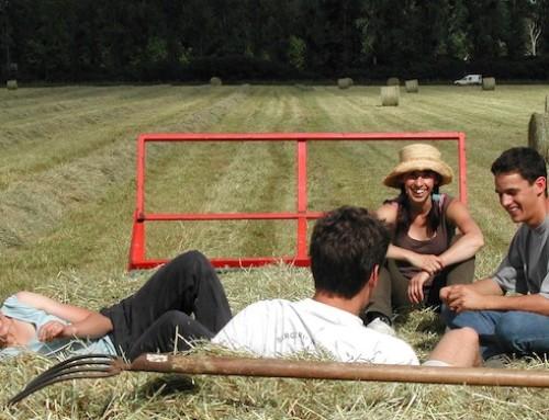 PAC, interrogazione alla Commissione europea sull'accesso al credito per i giovani agricoltori