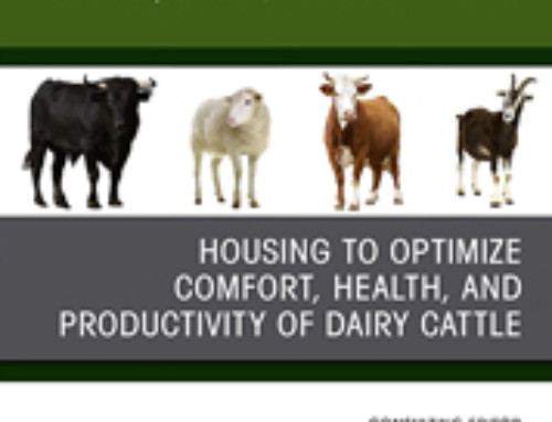 Housing to optimize comfort, health and productivity of dairy cattle