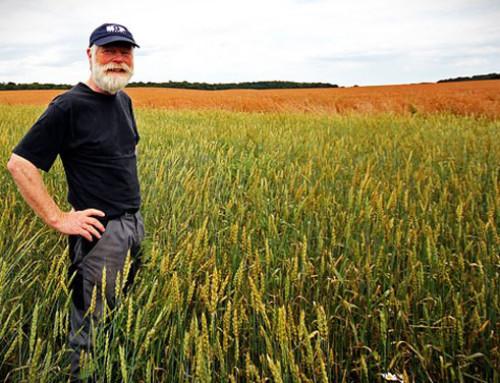 USA: l'USDA annuncia nuovi aiuti per gli agricoltori colpiti da dazi e tensioni commerciali