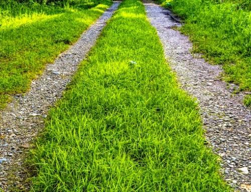 Strade bianche, bando Regione Lazio per miglioramento e ripristino viabilità forestale extra aziendale: il punto con l'agronomo