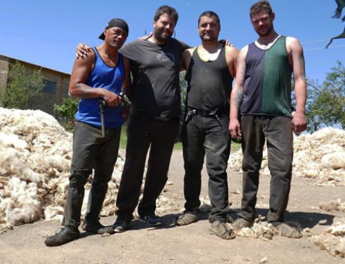 Storie di Allevatori: la tosatura dei Māori