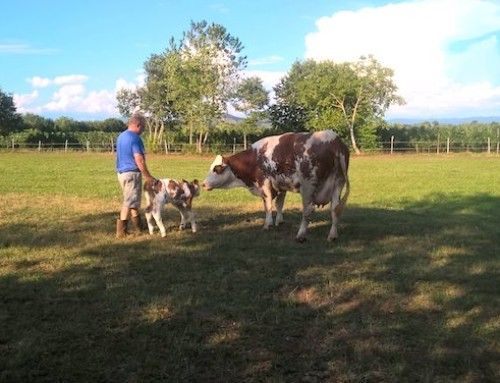 Fattoria di (contro)tendenza: l'azienda agricola di Giuseppe Zoff