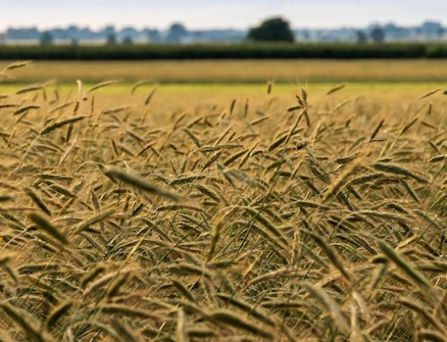 Agricoltura: rafforzare ruolo Regioni nella nuova Pac. Firmato il manifesto di Rennes