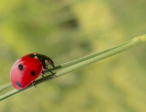 Uso di fertilizzanti sintetici nell'agricoltura biologica in Spagna, un'interrogazione parlamentare