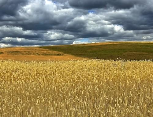 Import e export cerealicolo: calano le quantità ma aumenta il valore