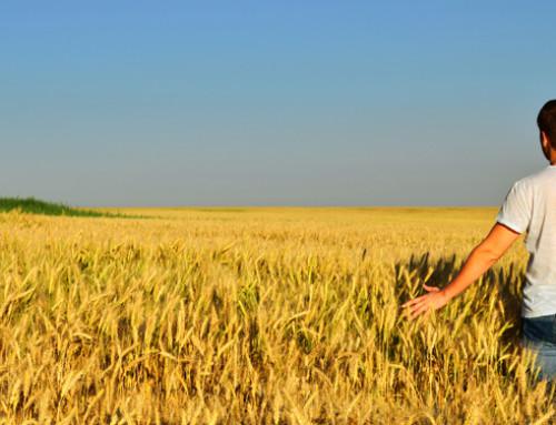 PSR 2014-2020: i sostegni ai giovani agricoltori della Regione Piemonte e della Regione Lazio