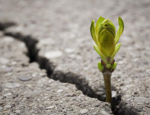 Occuparsi del consumo del suolo: non per noi ma per chi verrà dopo di noi