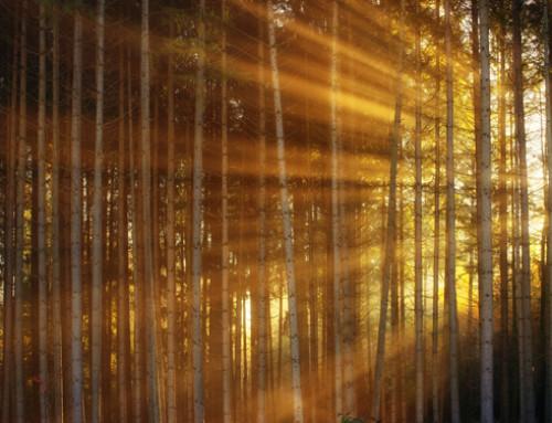 Riduzione delle emissioni di gas a effetto serra: interrogazione parlamentare su strumenti finanziari per miglioramento o aumento copertura forestale