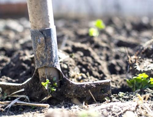 L'agricoltura nella Legge di Bilancio 2020: i dettagli a cura del Servizio Studi della Camera