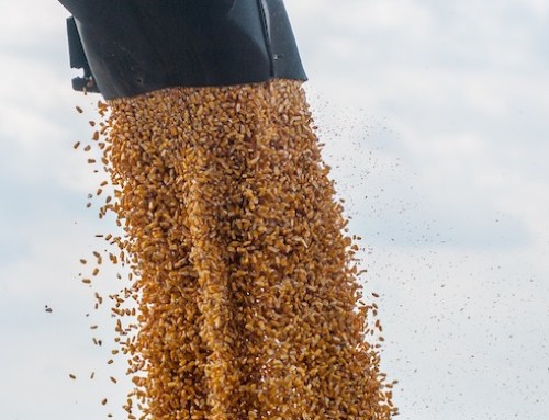 Controlli ufficiali nella filiera dei mangimi: i NAS di Caserta sequestrano un deposito e 7 ton di mangimi