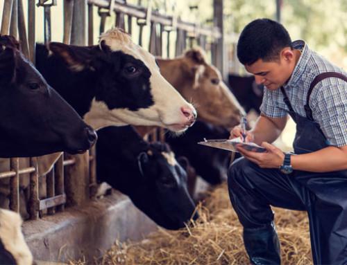 """Consiglio """"Agricoltura e pesca"""", Bellanova: benessere animale, necessario un sistema di etichettatura trasparente"""