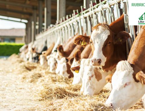 Il calo di produzione estivo non è legato solo alla ridotta ingestione di sostanza secca