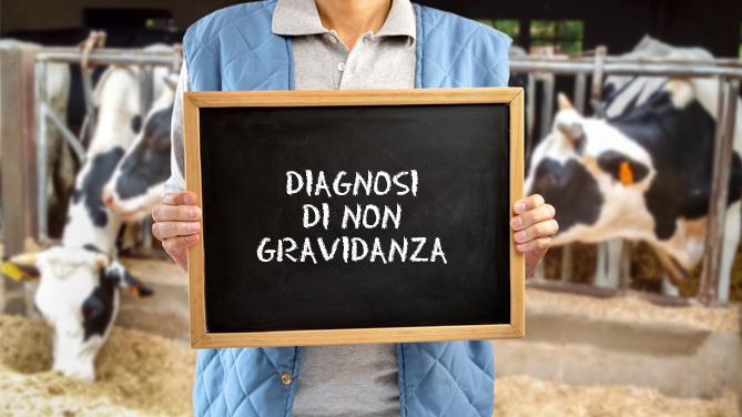 Calendario Cinese Gravidanza 2019 E Attendibile.Diagnosi Di Non Gravidanza Ruminantia Web Magazine Del
