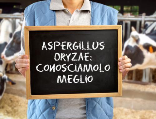 Aspergillus oryzae: conosciamolo meglio