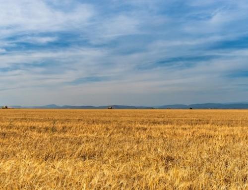 Regione Lazio, il contrasto al caporalato in agricoltura diventa legge