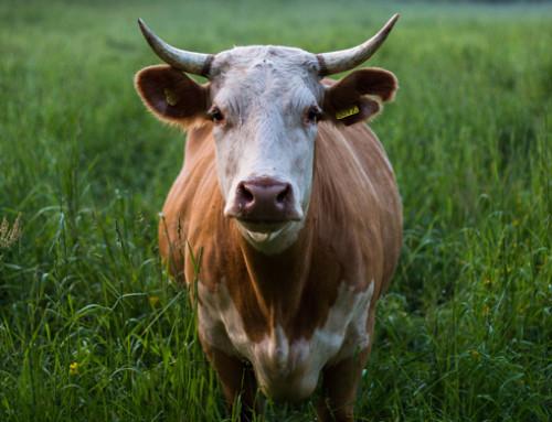 Impatto della zootecnia sulla biodiversità: linee guida per una valutazione quantitativa