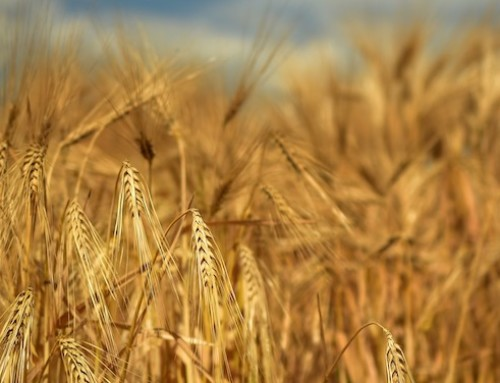 Parlamento europeo, interrogazione su mafia rurale: la Commissione intende presentare nuova strategia dell'UE sulla sicurezza, priorità all'agricoltura