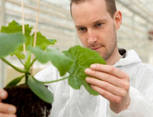 Parlamento europeo: no ai brevetti di piante e sementi di origine naturale