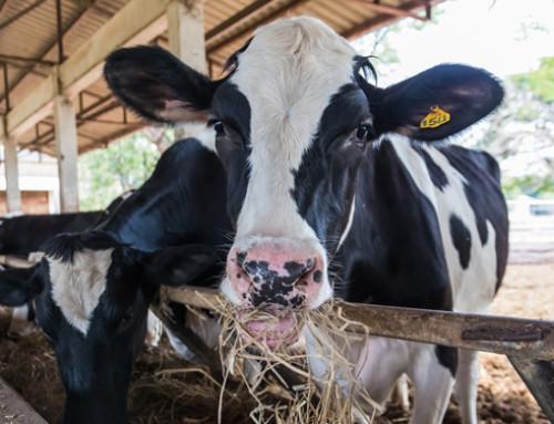 L'attuazione del benessere animale nella programmazione 2014-2020 della politica di sviluppo rurale