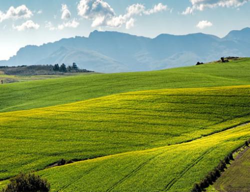 Corteva Agriscience crea un programma di sovvenzioni per promuovere un'agricoltura più  positiva nei confronti del clima