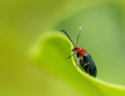 Corteva Agriscience investe negli insetticidi di origine naturale