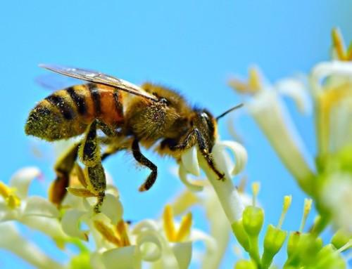 Biodiversità: il Parlamento europeo chiede obiettivi vincolanti a livello UE e globale