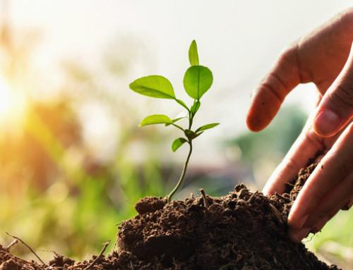 Commissione europea: il suolo conta per il nostro futuro. Cosa sta facendo la PAC per proteggerlo?