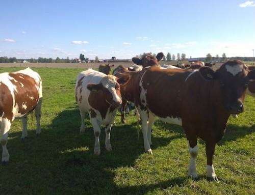 Valio punta a prodotti lattiero-caseari carbon neutral entro il 2035