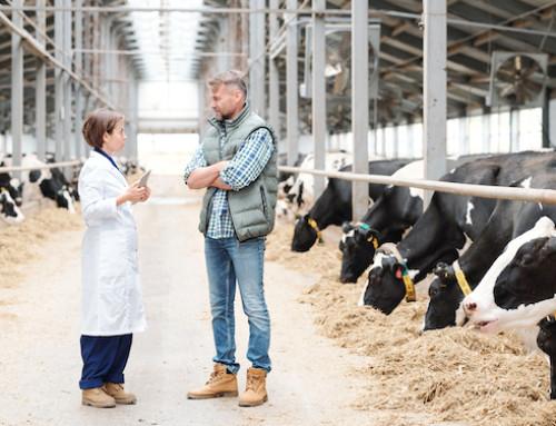 L'anaestro anovulatorio nella bovina da latte