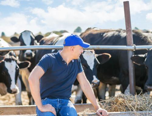 Parere del Comitato Sammarinese di Bioetica su benessere animale e COVID-19: una considerazione a latere