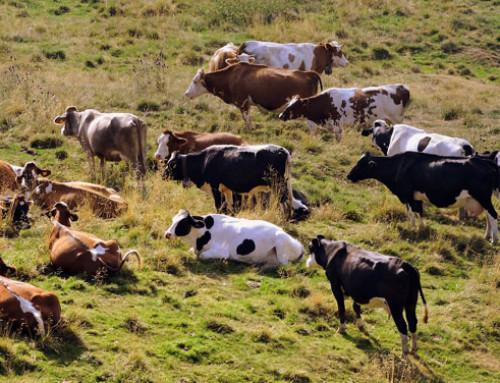 Basilicata: approvati interventi immediati per sostegno al settore lattiero-caseario