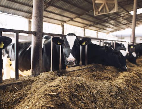 I provvedimenti a sostegno del benessere animale in UE