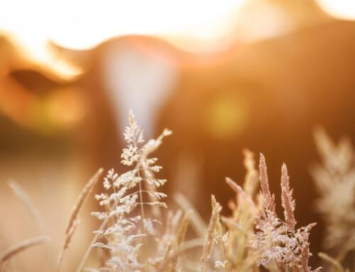 Stress da caldo e SBPLA: un approccio olistico