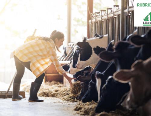 Un intestino sano e funzionale aiuta a prevenire la perdita di latte legata a chetosi e a stress da caldo
