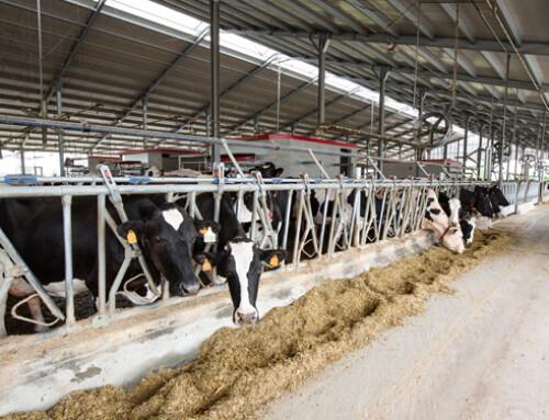 Lely Dairy XL a fianco dei grandi allevamenti per massimizzare l'utile netto