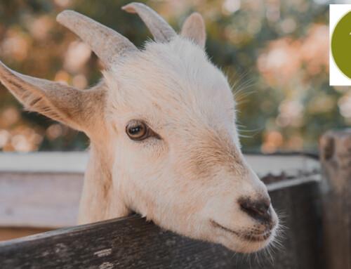 Comprendere e monitorare le vocalizzazioni delle capre: il progetto VOCAPRA
