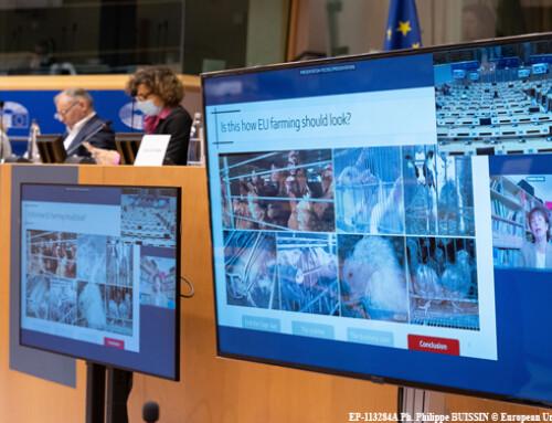 End the Cage Age: l'audizione del PE sull'iniziativa dei cittadini europei