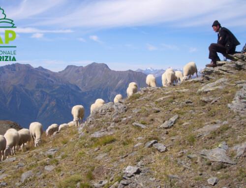 """Nasce la SNAP: """"Scuola nazionale di pastorizia"""""""