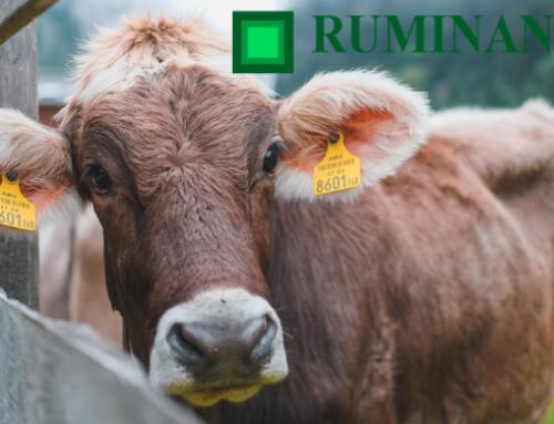 Ambiente e management dei ruminanti: la Selezione degli articoli 2020 di Ruminantia Mese