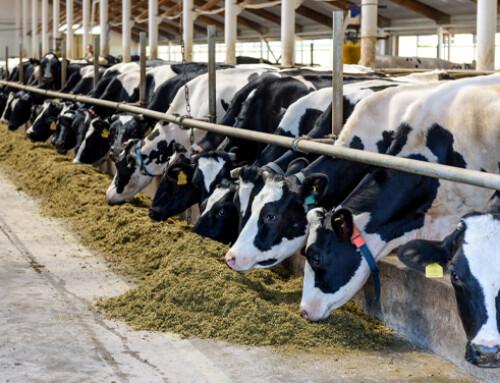 Mangimi alle stelle ed export in calo per latte e derivati