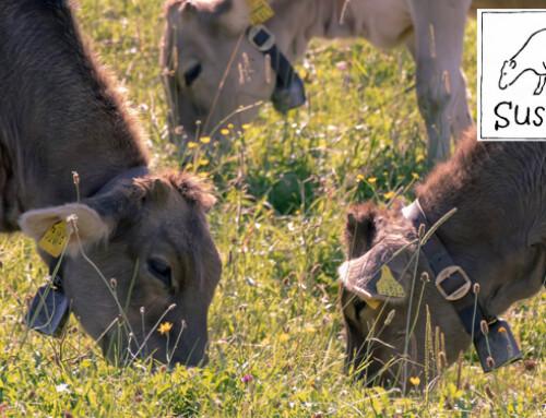 Sulla sostenibilità della zootecnia bovina italiana ed europea – Cosa ci insegna il progetto SusCatt?