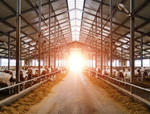 Miglioramento del benessere animale negli allevamenti: costi e benefici